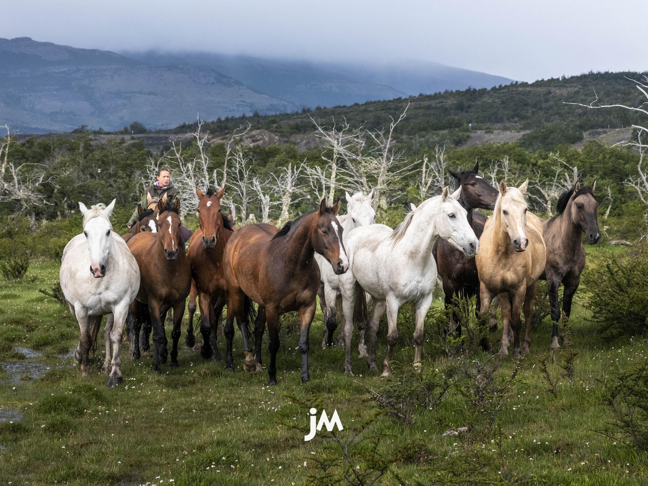 Chile, Patagonia Torres Del Paine
