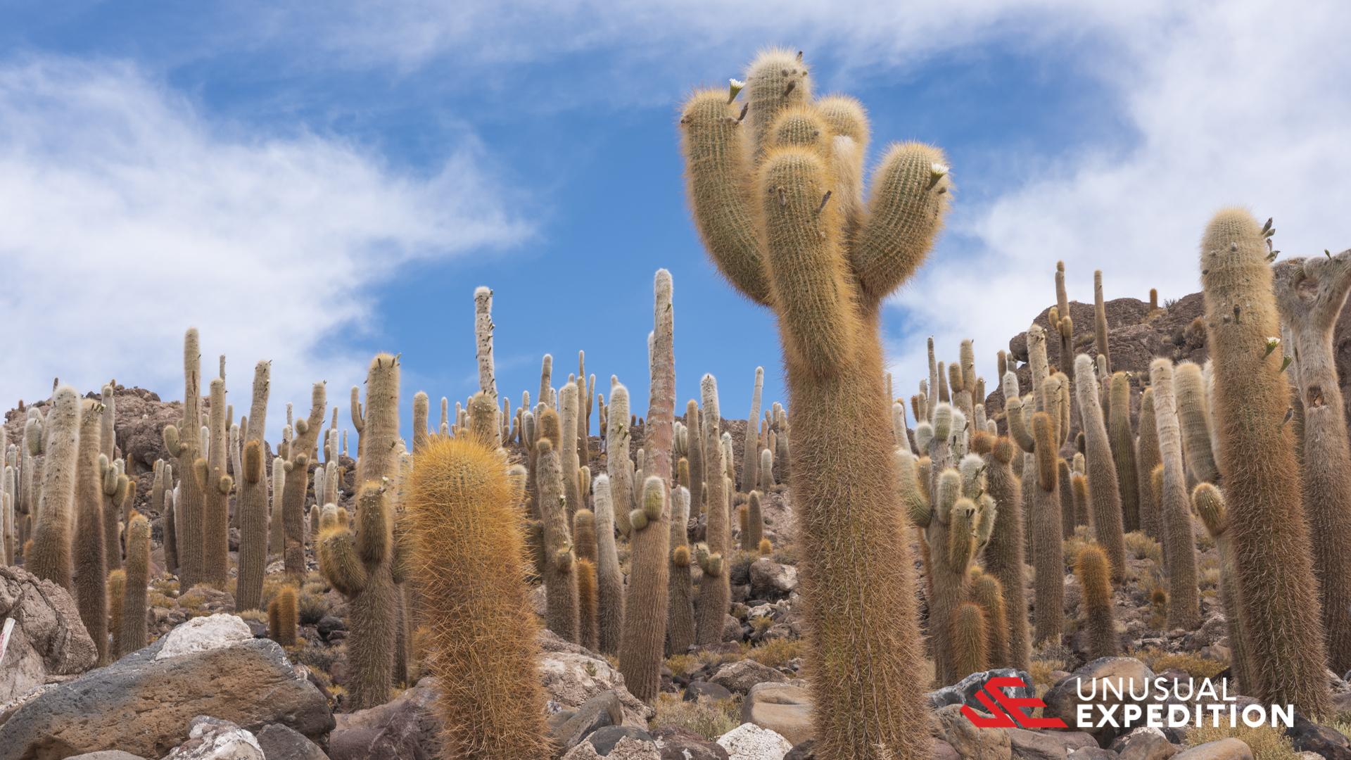 BOLIVIA – SALAR DE UYUNI PHOTO TOUR